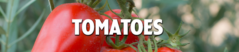 Tomatoes Header